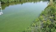 Zwemvijver van Resort De Kempen in Mol tijdelijk dicht wegens blauwalgen