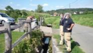 Olievervuiling in Klijpebeek houdt aan, vervuiler nog niet gevonden