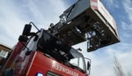 Brandweer redt katje dat zes meter hoog in top van boom zit