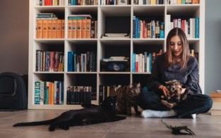 Eerste Limburgs kattencafé opent binnenkort de deuren in Genk