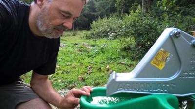 """Natuurpunt moet weidepompen plaatsen om te verhinderen dat Galloway-runderen omkomen van de dorst: """"Er stroomt bijna alleen nog afvalwater door de beekjes"""""""