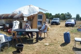 Geen plaats voor 11 honden en paard in OCMW-woning, en dus verhuisden Ria en Patrick naar zelfgebouwde barak