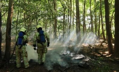 Spelende kinderen veroorzaken bosbrandje