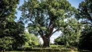 """Experts waarschuwen nadat boom op gezin valt: """"Hittegolf? Picknick niet onder bomen die er ziek of oud uitzien"""""""