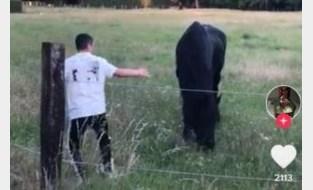 Ophef over TikTok-video waarin paarden worden opgejaagd door jongeren