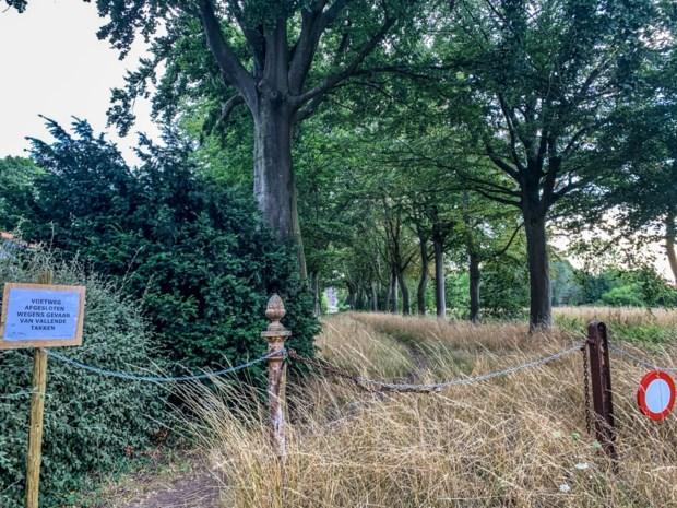 'Mooiste plekje van Avelgem' afgesloten wegens vallende takken