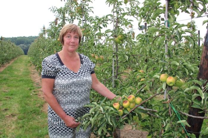 """Zo heet dat appels en peren gewoon aan de boom verbranden: """"Weinig aan te doen, het weer is de baas"""""""