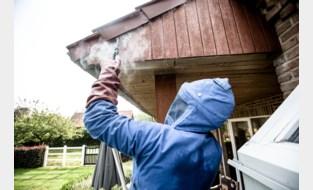Brandweer vraagt om wespenverdelging online aan te vragen