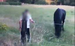 """Ophef over TikTok-video waarin paarden worden opgejaagd door jongeren: """"Dit zijn onnozelaars die geen respect hebben voor dieren"""""""