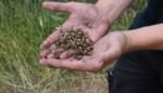 Landbouwers kunnen zelf iets ondernemen tegen oprukkende coloradokever