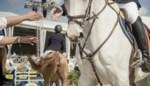 Paardenjumping stal 't Janshof gaat door