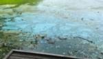 Hittegolf en ondiep water, dus blauwalgen in Het Broek