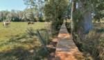 Nieuw vlonderpad in de Watermolenstraat