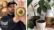 DIY: Tiktokker toont eenvoudige manier om weelderige avocadoplant te kweken