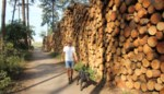 Even wennen: wandelaars passeren stapels gekapte sparren voor ze bos in kunnen