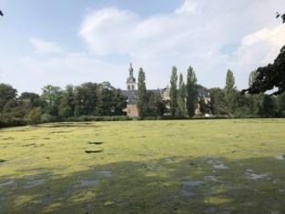 Vijver Abdij van Park kleurt volledig groen