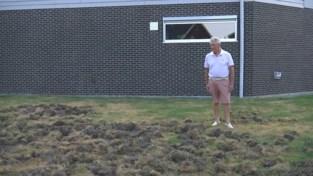 Everzwijnen vernielen voor de vierde keer in drie weken dezelfde tuinen in Hasselt
