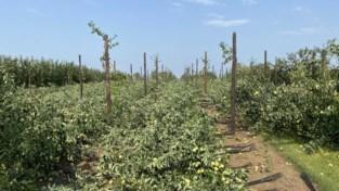 Valwind vernielt appelplantage