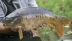 Vissen sterven door zuurstoftekort in ringgracht Merksplas-Kolonie