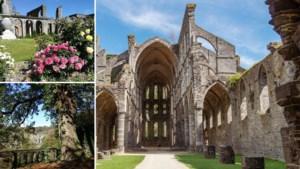 Wandelen in de voetsporen van de verdreven cisterciënzers rond de imposante abdij van Villers