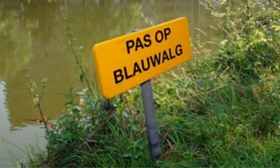 Steeds meer Blauwalgen op vijver Brusselse Forten: geen waterrecreatie toegelaten
