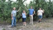 """Pajotse fruitboeren zijn nog volop op zoek naar plukkers: """"Onze seizoensarbeiders geraken door coronacrisis niet tot hier"""""""