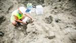 Uitzonderlijke vondst in Deurne: bijna compleet walvisskelet van 8 tot 9 miljoen jaar oud