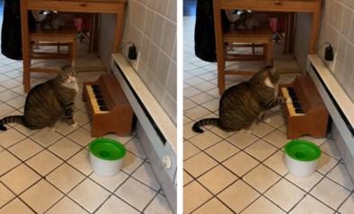 Deze kat heeft wel een heel speciale manier om te laten weten dat het etenstijd is