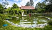 In deze tuin kunnen de kinderen zwemmen tussen de kikkers