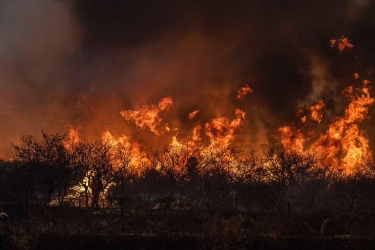 Duizenden bosbranden in Argentinië