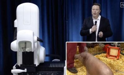 """Elon Musk plant chip in bij varken om hersenziekten als alzheimer te genezen: """"Met Musk moet je altijd voorzichtig zijn, maar dit is niet zomaar een stunt"""""""