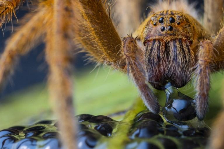 Indrukwekkende natuur: krokodil met honderden baby's, nijlpaard in modderbad, en de maaltijd van een spin