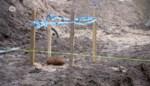 Oude mortiergranaat gevonden in Kapellen