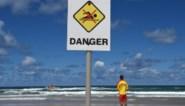 Al zeven surfers overleden na haaienaanval in Australië