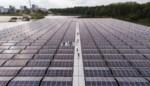 Eerste drijvend zonnepark van Vlaanderen geopend in Dessel moet verbruik van 2.000 gezinnen opvangen