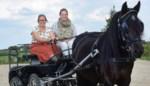 Stal Moleneind start crowdfunding voor rolstoeltoegankelijke paardenkoets