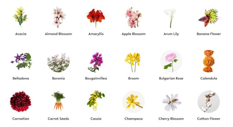 Deze website helpt je om een nieuw parfum te kiezen