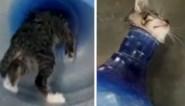 """Zwerfkatje wordt uit waterfles gered: """"Waarschijnlijk het werk van een dierenbeul"""""""