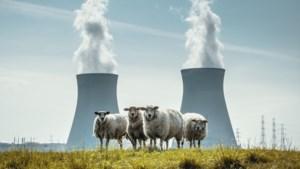 """Bond Beter Leefmilieu nuanceert studie over goedkopere kerncentrales: """"We besparen geen 100 miljoen euro per jaar, Engie Electrabel krijgt 100 miljoen extra """""""