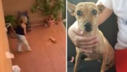 Vrouw mishandelt hondje omdat het dier zijn behoefte in huis doet: politie opent onderzoek