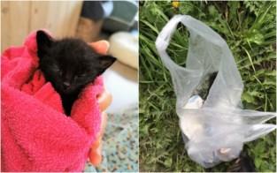 """Kitten Nand overgoten met lijm gevonden in gracht in Mol: """"Wie kan nu zo gruwelijk zijn"""""""