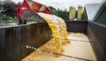 Twee miljoen kippen en 77 miljoen eieren vernietigd. Drie jaar na een van de grootste voedselschandalen staan veroorzakers fipronilcrisis voor de rechter
