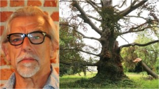 Kunstenaar Luc Verbist maakt nu al kunstwerk over eeuwenoude boom, die binnenkort snoeibeurt krijgt