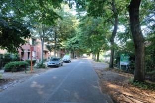 """Grote bomen zullen plaats ruimen voor kleinere: """"Parkeren moet hier ordelijker"""""""