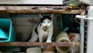 Te veel vogels voor de kat: Nederlanders pleiten voor verbod op loslopende katten