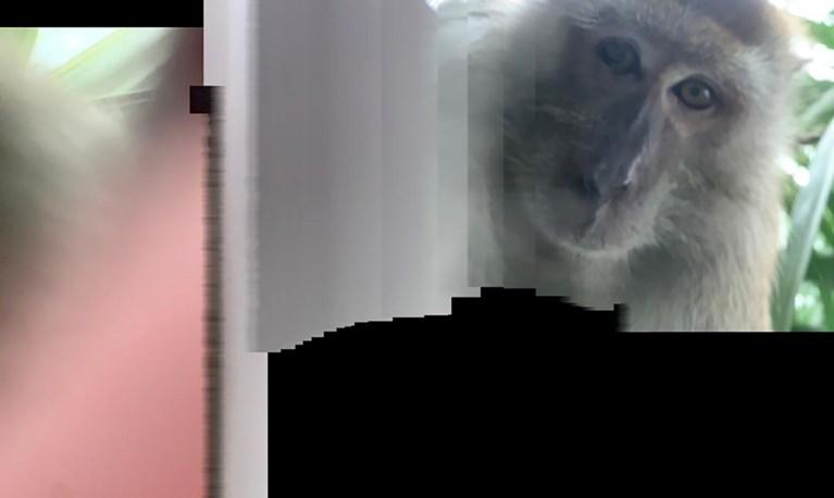 Student vindt gestolen gsm terug, maar kan zijn ogen niet geloven als hij achtergelaten foto's van de dader ziet