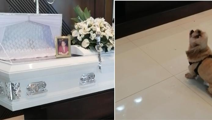 Hartverscheurend: hond wijkt geen seconde van doodskist tijdens begrafenis van zijn baasje