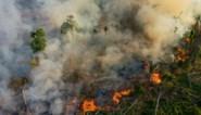 "Greenpeace: ""Recordaantal aangestoken branden in Amazonegebied en Pantanal"""