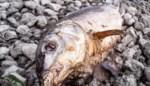 Geur van rotte vis in twee Gentse deelgemeenten door lek bij havenbedrijf
