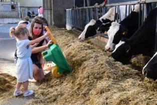 """Kleuters helpen mee op boerderij: """"We hebben een pasgeboren kalfje met een kruiwagen weggebracht"""""""